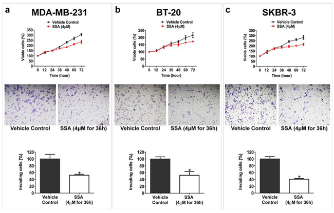 SSA inhibits breast tumor cell invasion at a sub-cytotoxic condition.
