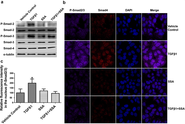 Inhibition of Smad-2/3 phosphorylation is responsible for SSA Suppression of TGFβ signaling.