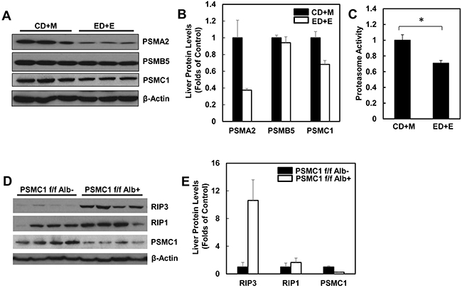 Alcohol impairs hepatic proteasome function and genetic inhibition of proteasome increases protein levels of hepatic RIP1 and RIP3.