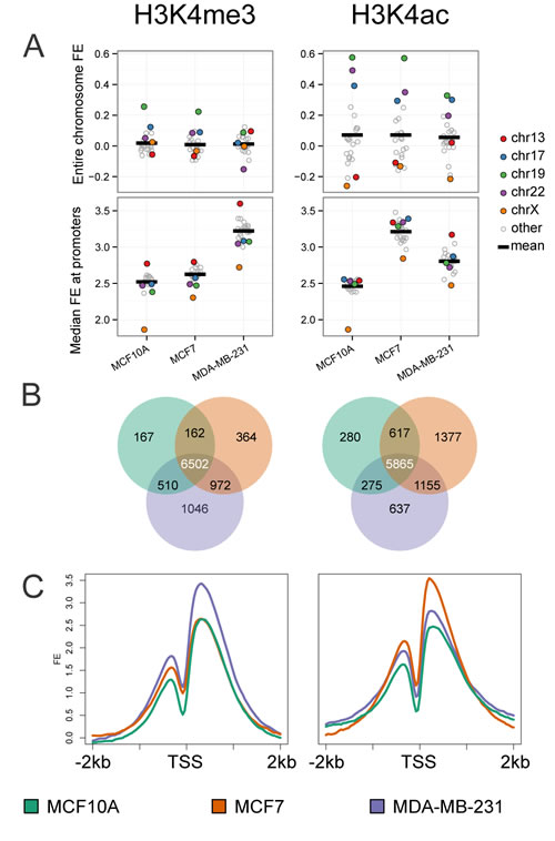 Genome-wide analysis of histone H3K4me3 and H3K4ac patterns by cell line.