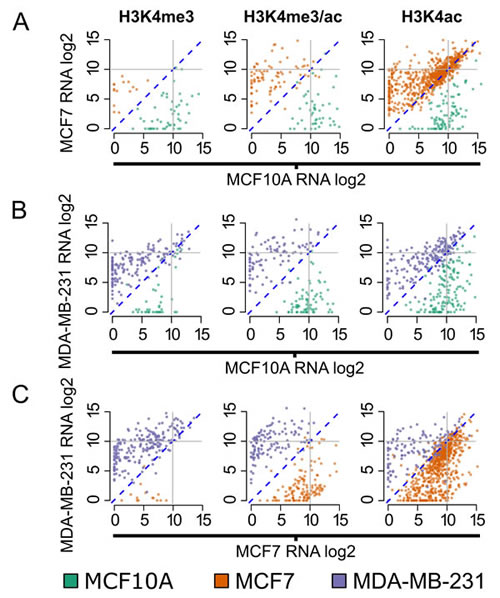 Genes dynamically marked by H3K4me3/ac are differentially expressed.