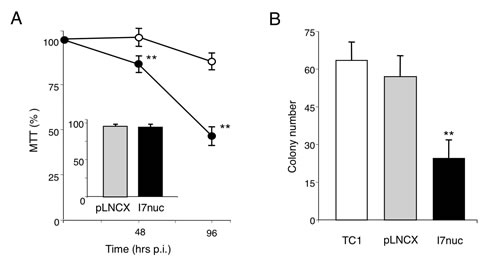 Effect of I7nuc expression on cell proliferation.