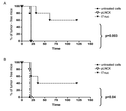 Inhibition of TC1 and C3 tumor growth by I7nuc intrabody expression.