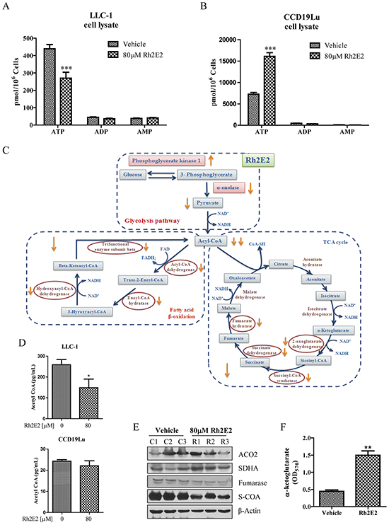 Effect of Rh2E2 on the network-based metabolic reprograming of LLC-1 cancer cells.