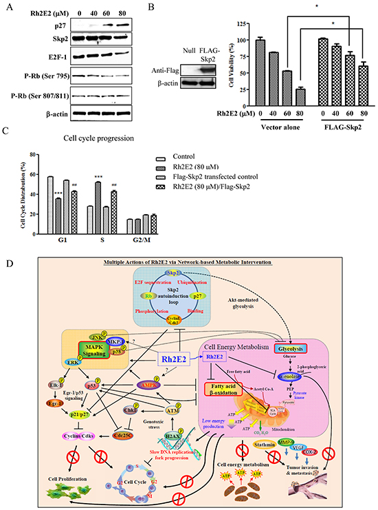 The role of Skp2 in Rh2E2-induced anti-cancer effect.