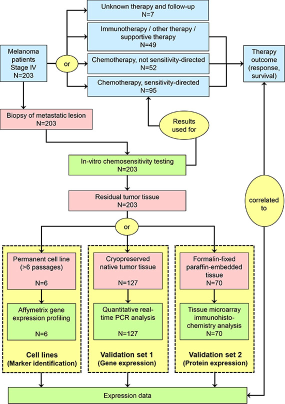 Schematic presentation of study flow.