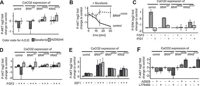 Downregulation of AKT activity by Sorafenib is restricted to BRAF/KRAS wildtype cells.