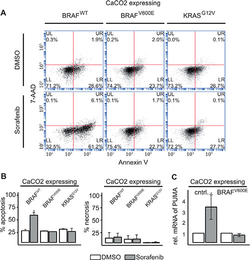 RAF inhibitor induced AKT phosphorylation leads to induction of apoptosis in KRAS/BRAF wildtype cells.