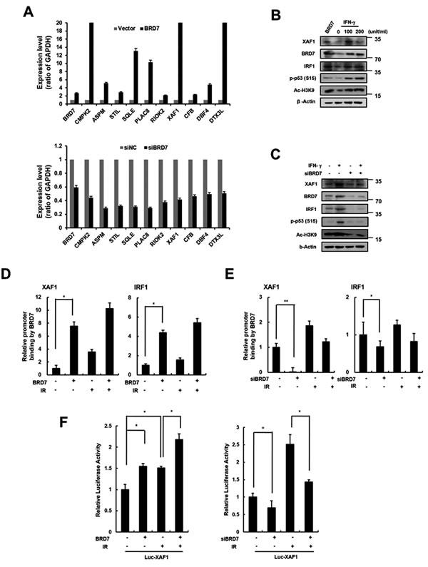 Transcriptional regulation of XAF1 by BRD7.
