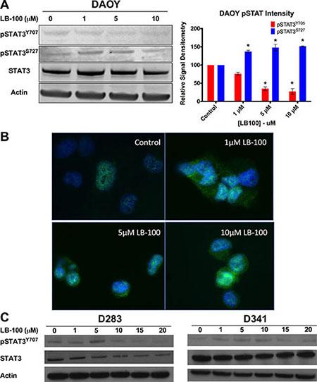 LB100 inhibits STAT3 activation.