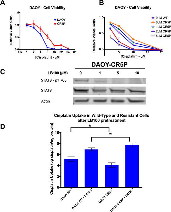 LB100 overcomes in vitro cisplatin resistance, decreases STAT3 activation and increases cisplatin uptake in cisplatin-resistant cells.