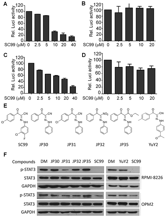 Identification of SC99 as a STAT3 inhibitor.