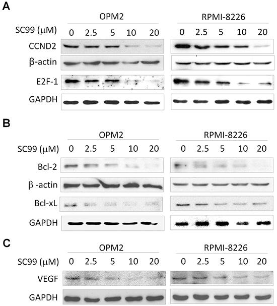 SC99 downregulates STAT3-regulated genes in MM cells.