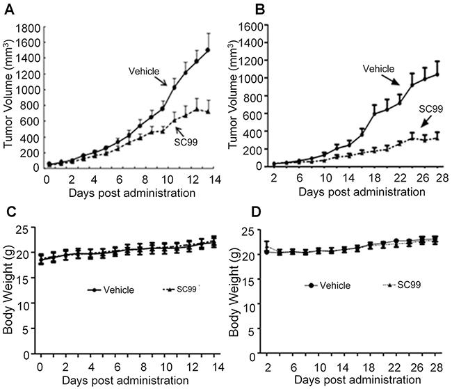 SC99 delays myeloma tumor growth in xenograft mice models.
