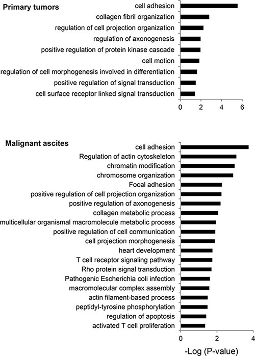 Biological processes frequently mutated in primary tumors and malignant ascites.