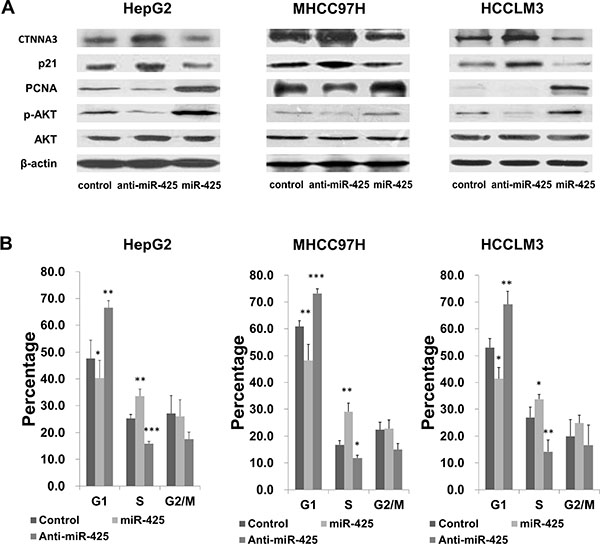 miR-425 regulates HCC cell cycle progression by inhibiting CTNNA3.