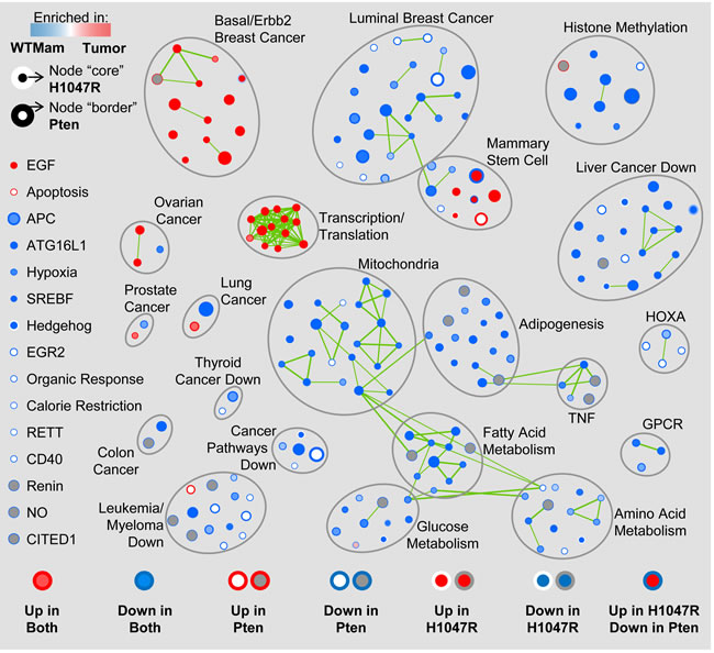 Gene Set Enrichment Analysis (GSEA) map of Pten