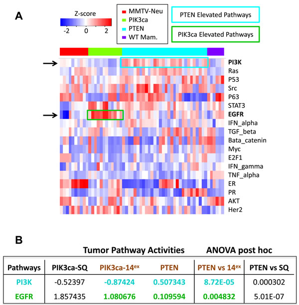 Pathway activity analysis of 18 oncogenic signalling in Pten