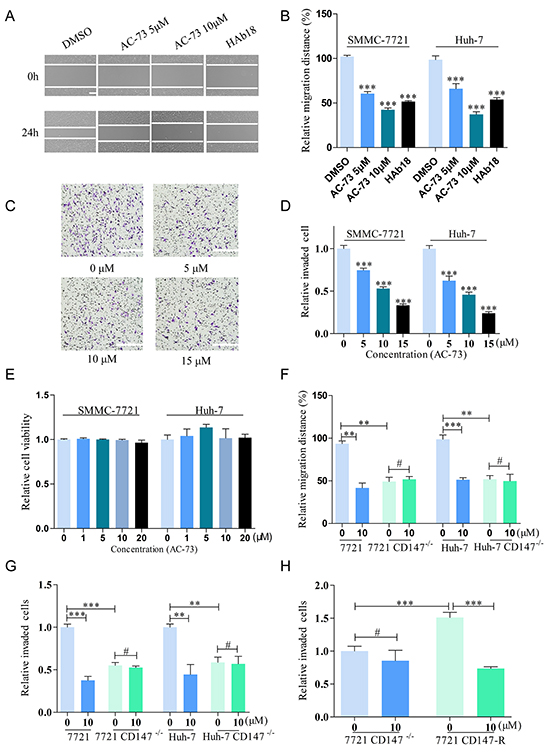 AC-73 decreases the motility and invasiveness of HCC cells via CD147 inhibition.