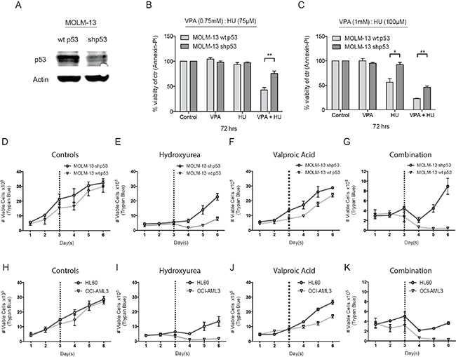 Investigating the role of p53 in HU and VPA combination therapy.