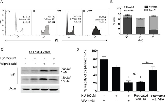 Complimentary regulation of cell cycle status following combination therapy in OCI-AML3 cells.