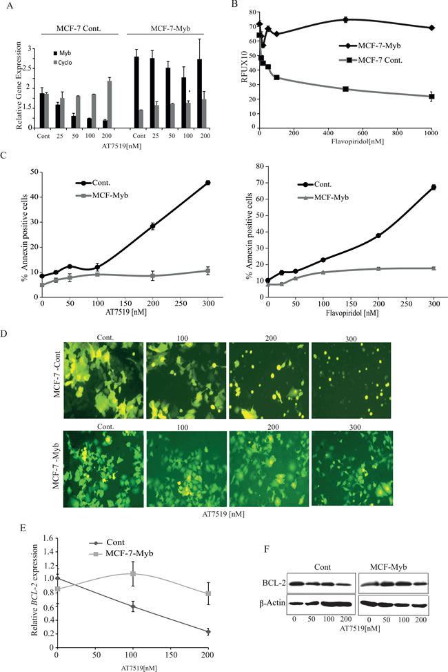 Ectopic expression of MYB is sufficient to overcome CDK9 inhibitor mediated apoptosis of ER
