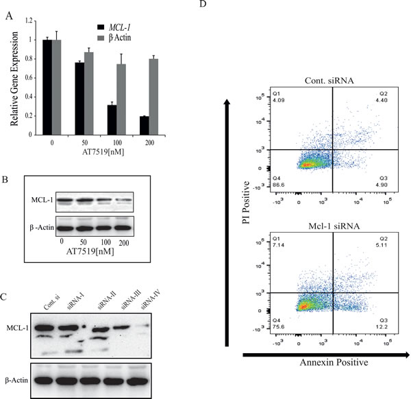 CDK9 inhibitor-mediated down-regulation of MCL-1 is not sufficient to induce apoptosis in ER
