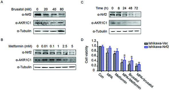 Brusatol and metformin reversed progestin resistance and downregulated Nrf2 and AKR1C1 expression.