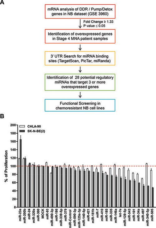 Functional screening of selected miRNAs.