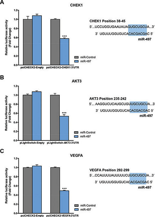 CHEK1, AKT3 and VEGFA are miR-497 direct targets.