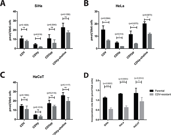 Intracellular metabolism of CDV in parental and CDVR SiHa (A), HeLa (B) and HaCaT (C) cells.