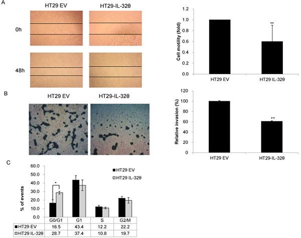 IL-32θ inhibits colon cancer tumorigenicity in vitro.