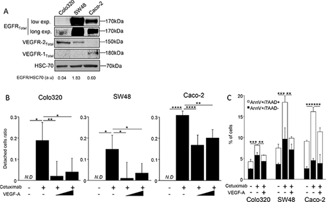 VEGF-A can inhibit cetuximab cytoxicity in vitro.