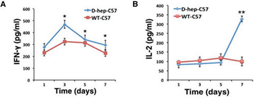 IFN-γ and IL-2 levels were increased in D-hep-C57 mice after Hep cell challenge.