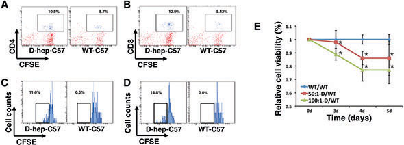 Lymphocytes from D-hep-C57 mice were activated by Hep cells and induced cytotoxicity in vitro.