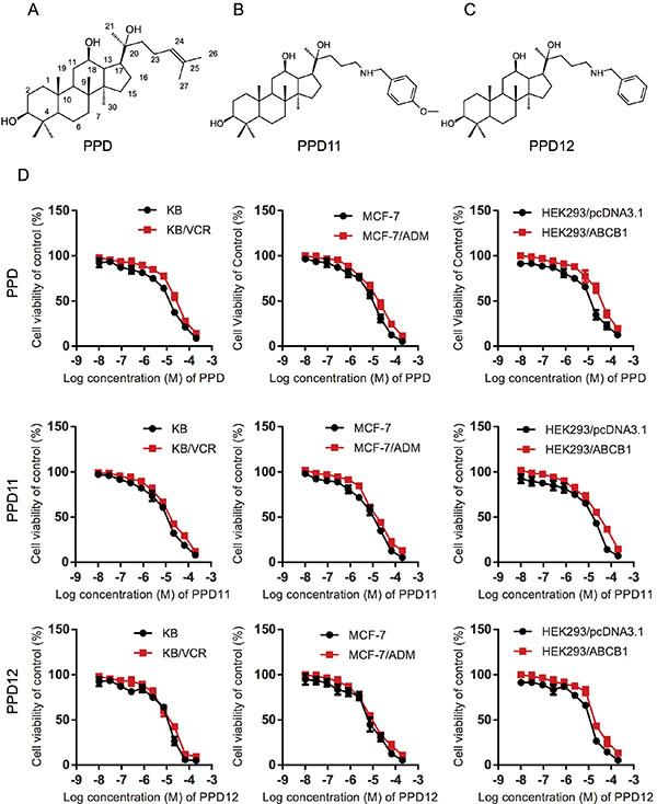 Influence of PPD, PPD11 and PPD12 on the cell viability of chemotherapy-sensitive and multi-drug resistant (MDR) cancer cells, respectively.
