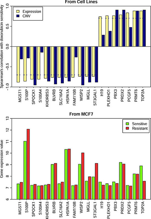Gene expression and the CNVs of 19 genes in the resistant and sensitive cell lines.
