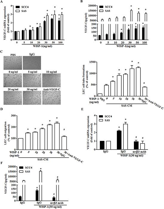 WISP-1 promotes lymphangiogenesis through up-regulation of VEGF-C in OSCC cells.