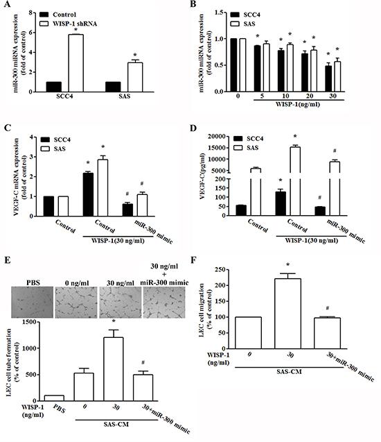 WISP-1 promotes VEGF-C expression by down-regulating miR-300.
