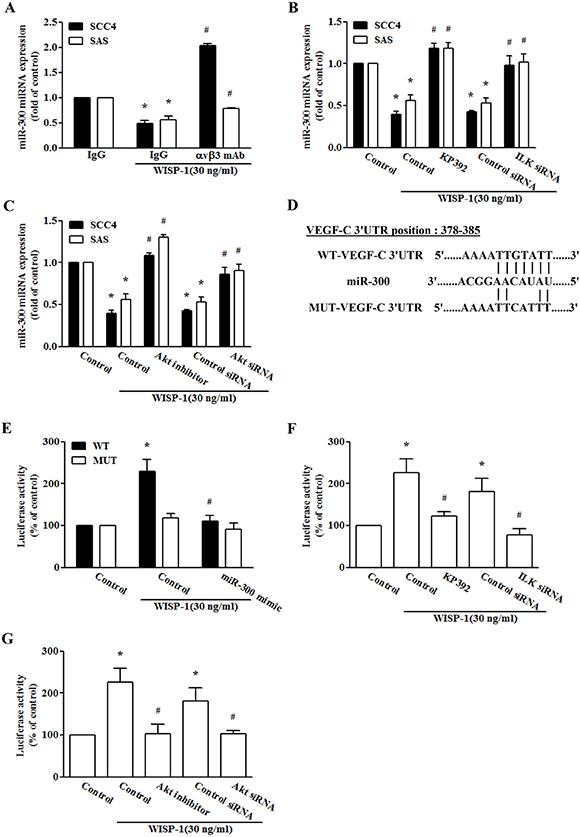 miR-300 directly represses VEGF-C expression via binding to the 3′-UTR of human VEGF-C.