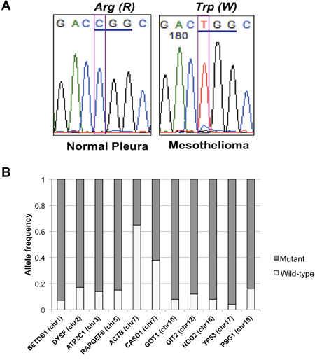 TP53 mutation and allele frequency of all variants.