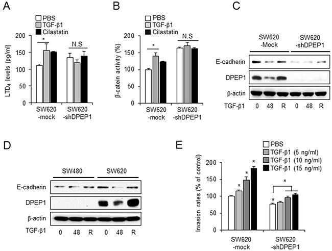 DPEP1 regulates E-cadherin plasticity in TGF-β-mediated EMT.