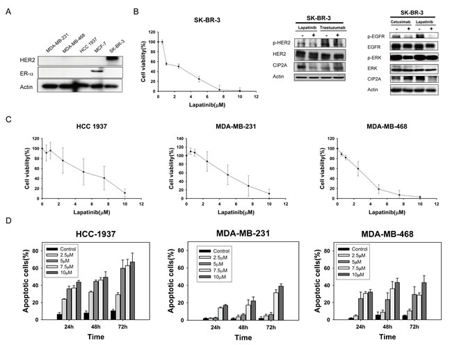 Lapatinib exerts anti-proliferative and apoptotic-inducing effects in triple-negative breast cancer (TNBC) cells.