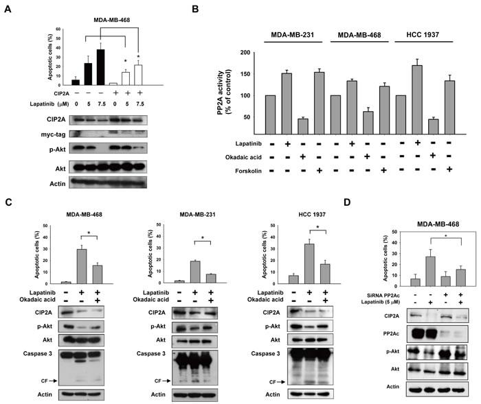 CIP2A/PP2A/p-Akt mediates lapatinib-induced apoptosis in TNBC cells.