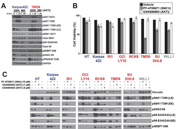 Distinct regulation of S6K1 signaling in DLBCL subtypes.