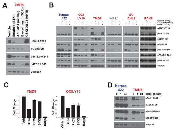 mTOR signalling is activated independently of AKT in ABC-DLBCL