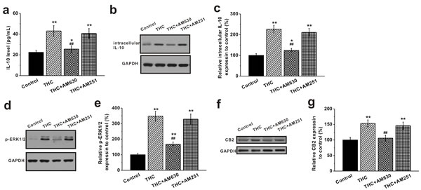 Activation of CB2 receptors by THC stimulates IL-10 release and the ERK pathway in BM-MSCs.