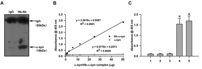 Demonstration of the presence of nHb-α-syn complex.