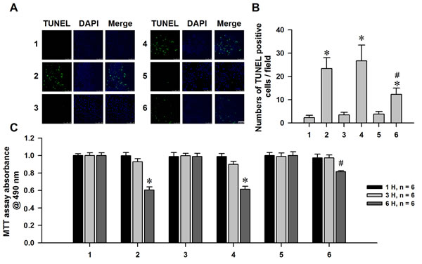 Neuroprotective effect of nHb against α-syn induced dopaminergic neuronal cells injuries.