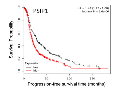 Kaplan-Meier curves of association between expression of PSIP1 with PFS in EOC.